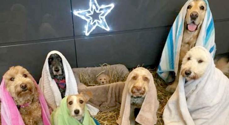 Les chiens de ce refuge ont mis en scène une amusante crèche à quatre pattes
