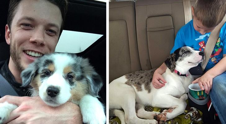 16 Fotos, die die erste Begegnung zwischen adoptierten Hunden und ihren neuen menschlichen Freunden zeigen