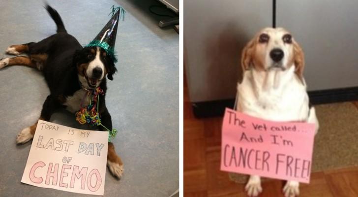 Deze dappere honden werden aan het einde van hun strijd tegen kanker vereeuwigd