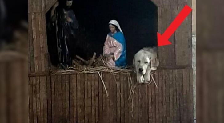Un chien abandonné a trouvé refuge dans la crèche du village, aux côtés de Joseph et Marie