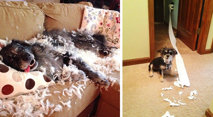 12 hilarious photos showing some very naughty dogs caught in the act