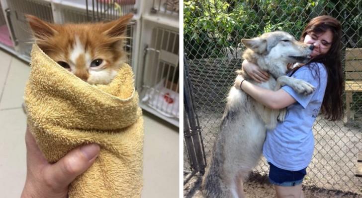 14 foto mostrano cosa significa lavorare in un rifugio per animali