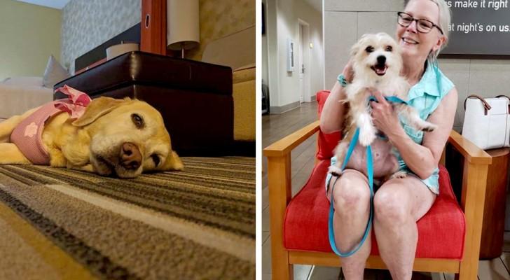 In questo hotel è possibile prendersi cura di un cane durante la permanenza e decidere poi se adottarlo o meno