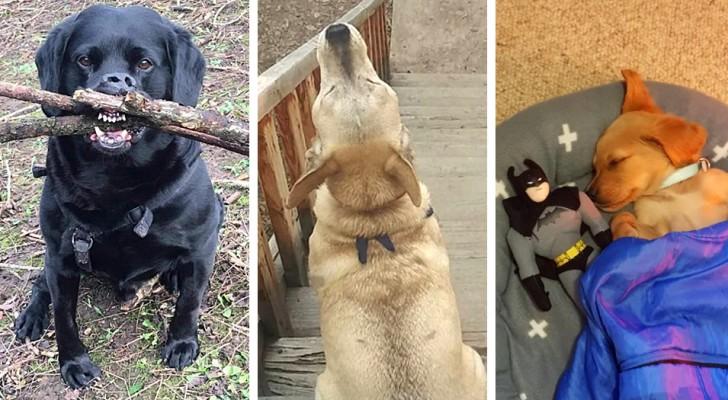 13 photos de chiens adorables pris dans leurs moments les plus hilarants