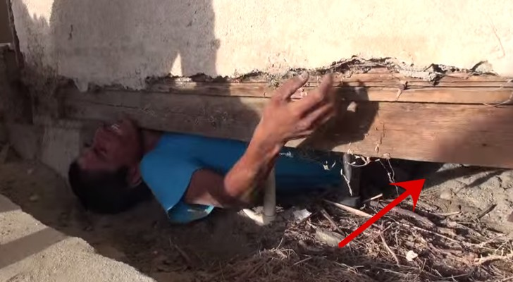 The way these 3 dogs and 9 puppies thank their rescuers, Will impress you