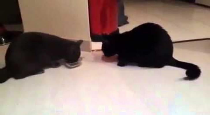 Two cats and a single bowl, here's how to share without fighting