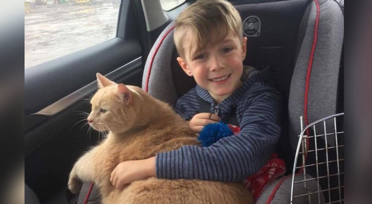 A mother allows her son to adopt a puppy but he chooses a large, older, and overweight cat