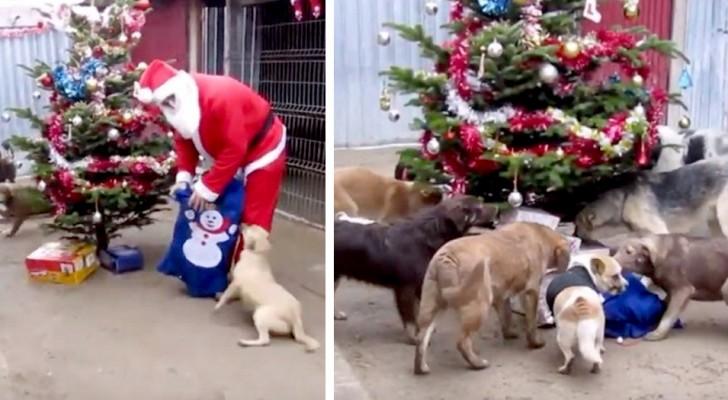 Ogni anno, Babbo Natale arriva in questo rifugio e fa felici gli animali regalando cibo e coperte