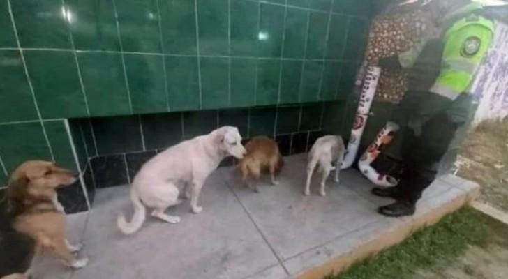 Algunos perros callejeros hacen la fila frente al distribuidor de comida y agua que la policía ha instalado para ellos