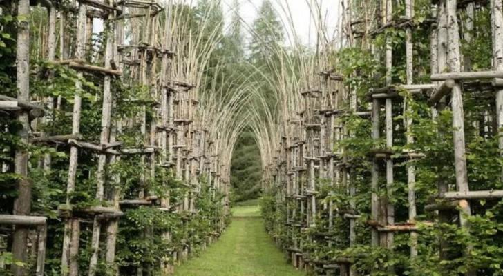 La Cattedrale Vegetale: het majestueuze werk van natuurlijke architectuur gemaakt door een Italiaanse kunstenaar