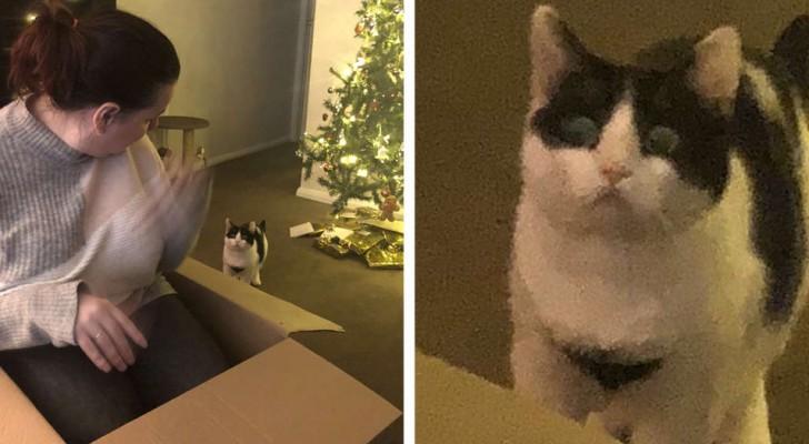 Deze kat raakt geïrriteerd wanneer hij ontdekt dat de doos geen cadeau voor hem was