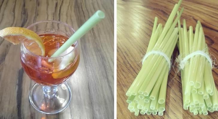 Arrivano dalla Sicilia le cannucce d'avena, una valida alternativa Made in Italy alla plastica monouso