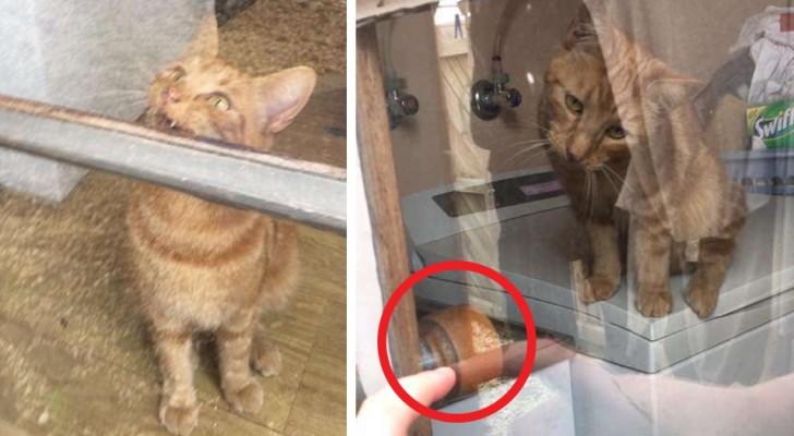 Während der Hausarbeit hat sie sich aus dem Haus ausgesperrt, aber ihre Katze schafft es, ihr die Tür zu öffnen