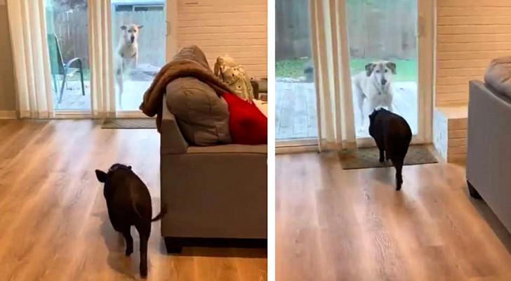 Chaque lundi, ce chien et son ami cochon se rencontrent et s'amusent comme si c'était la première fois
