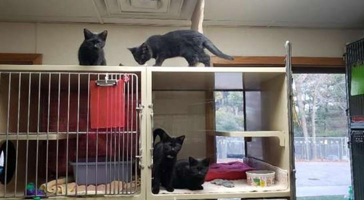 Kittens op de vlucht: 4 kittens slaagden erin hun kooi te openen zonder gezien te worden door de vrijwilligers van de opvang