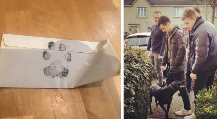Ihr Vermieter erlaubt keine Haustiere im Haus, deshalb bitten diese 4 Jungs den Nachbarn, mit seinem Hund zu spielen