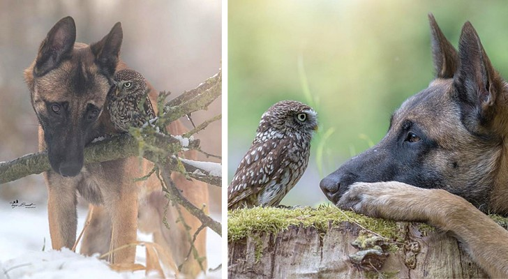 This photographer has managed to capture the tender friendship between a dog and an owl
