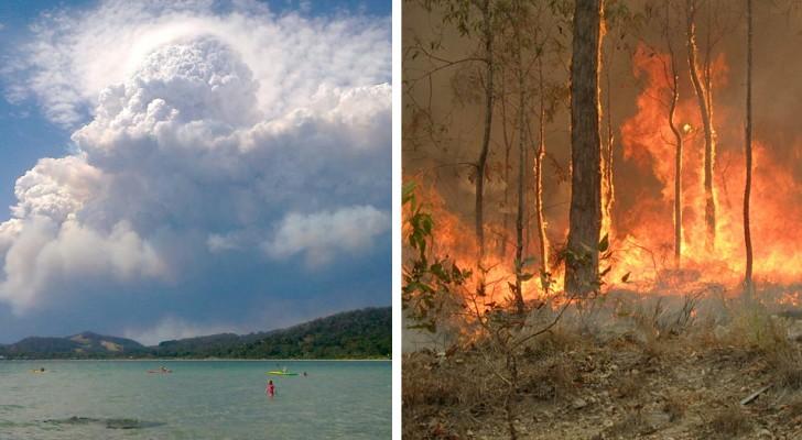 De branden in Australië zijn zo omvangrijk geworden dat ze een apart
