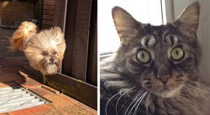 17 photos amusantes d'animaux qui ont montré qu'ils avaient une grande personnalité