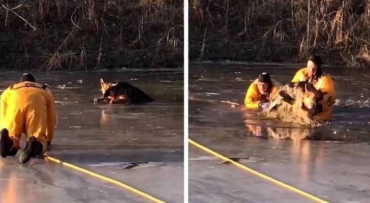 Die heldenhafte Rettung eines in einen zugefrorenen Teich gefallenen Welpen durch zwei tapfere Feuerwehrmänner