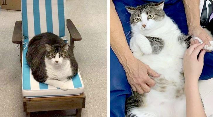 Fat Fred, le chat de 25 kilos que tous les passants imaginent
