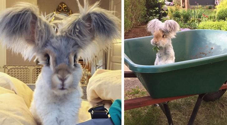 Het meest fotogenieke konijn op internet, dat met zijn grote en zachte oren ieders sympathie heeft gewonnen