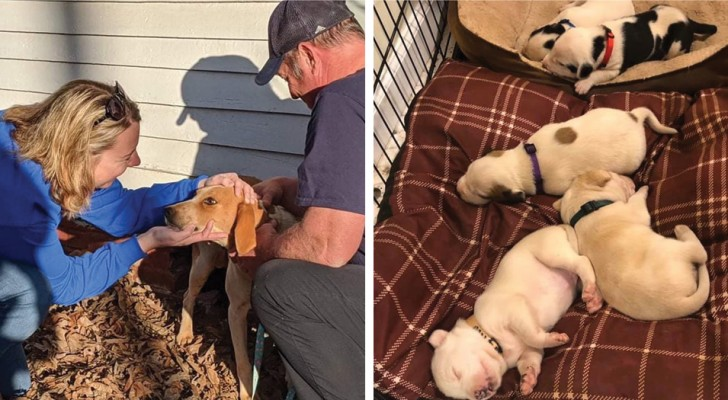A stray mother dog ​​hid her newborn puppies under a house to keep them safe