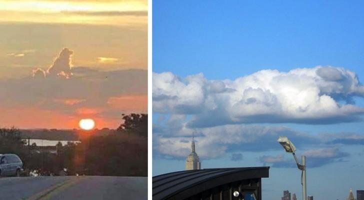 Ces images suggestives de nuages en forme de chiens montrent qu'eux aussi