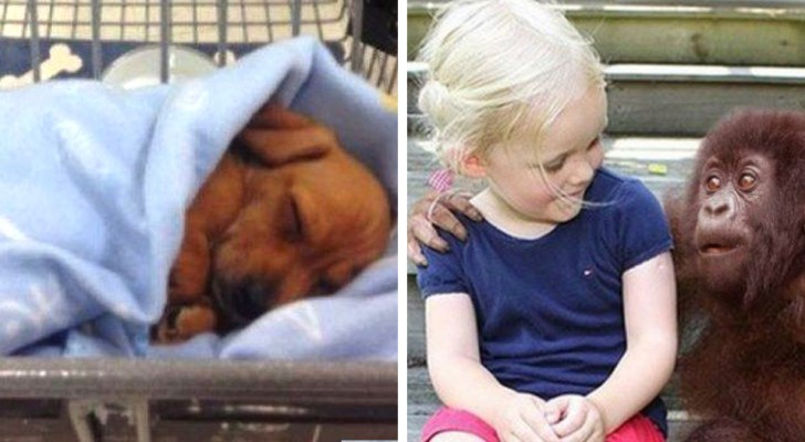 These 14 photos illustrate that the best things in life are the simplest