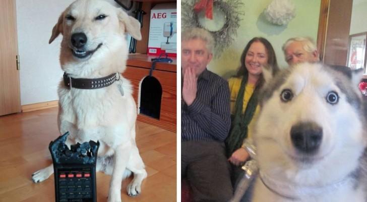 15 Bilder von Hunden, die ihre Besitzer zur Verzweiflung gebracht haben