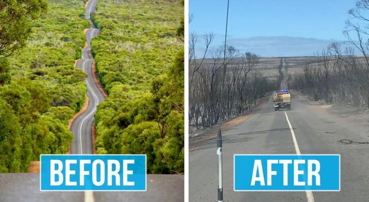 Ces deux photos mises en comparaison montrent toute la puissance dévastatrice des incendies en Australie