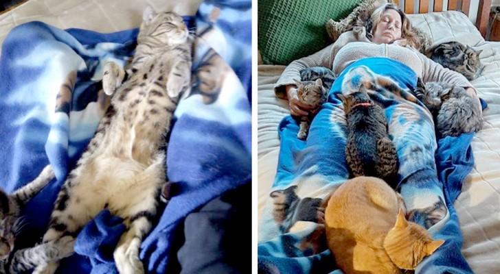 Ces tendres chats montent tous sur le lit et réconfortent leur maîtresse après une opération chirurgicale