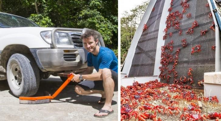 Migrazione dei granchi rossi a Christmas Island: le auto si equipaggiano con speciali