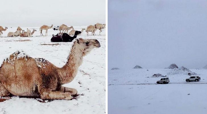 Neige en Arabie Saoudite : les images nous montrent les effets imprévisibles du vortex polaire