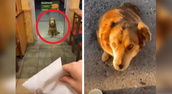 Dit hondje verschijnt elke dag buiten de deur van een restaurant en wacht op haar favoriete eten