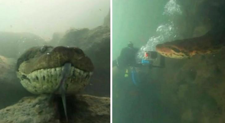 Twee duikers stonden oog in oog met een gigantische anaconda