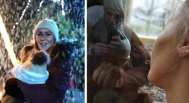 Una hembra de orangután se ha acercado a una mujer que amamantaba a su hijo, identifiquémonos con ella