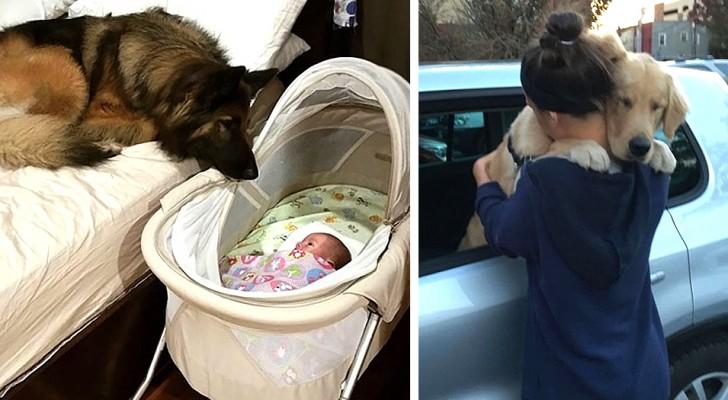 Estas 14 fotos mostram todo o amor que um cachorro pode nos dar