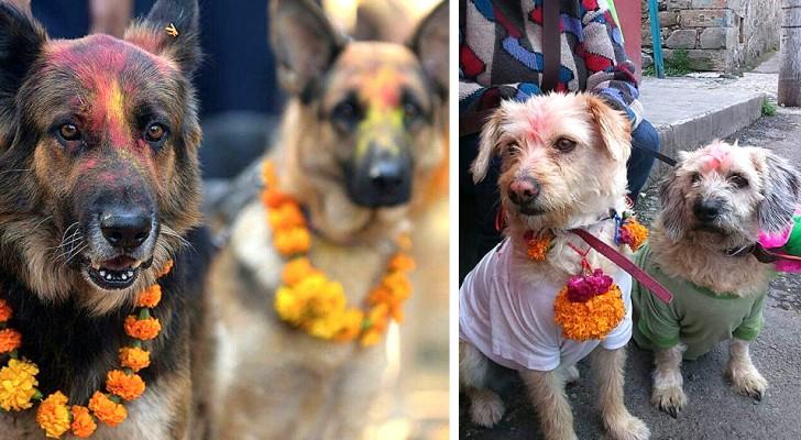 Ogni anno questa festa celebra i cani, ringraziandoli per l'amore e la fedeltà che sanno darci