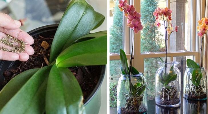 4 segreti da conoscere per coltivare splendide orchidee in casa
