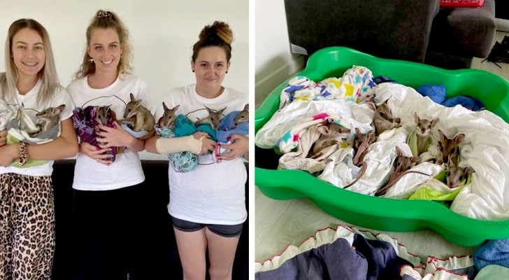 Estos cachorros de wallaby han sido salvados de los incendios y ahora disfrutan la tranquilidad bajo cálidas mantas