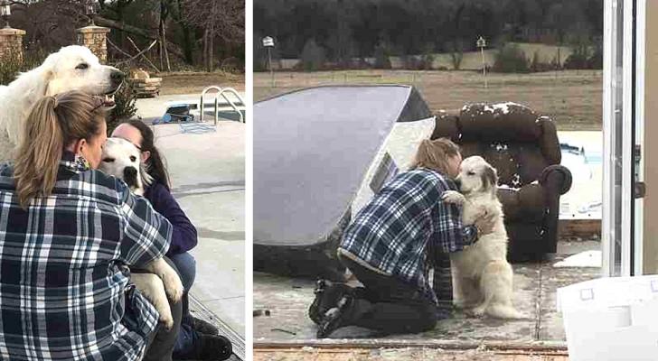 Las imágenes emocionantes de la perra que abraza a la familia luego que un tornado ha destruído su casa