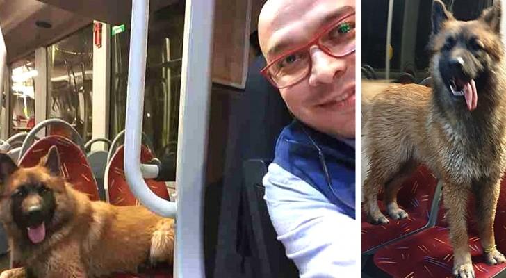 Um motorista de ônibus deixa um cachorro perdido subir no veículo e o ajuda a encontrar a sua família