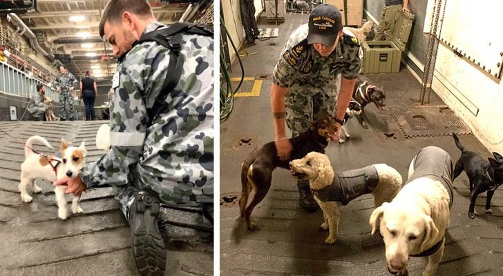 La Marina australiana ha ospitato su una nave oltre 100 animali domestici scampati agli incendi