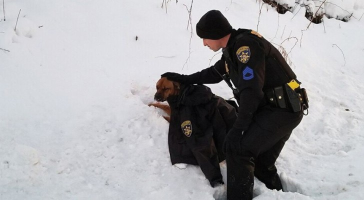 A policeman assists a dog that had just been hit by a car and uses his jacket to keep it warm