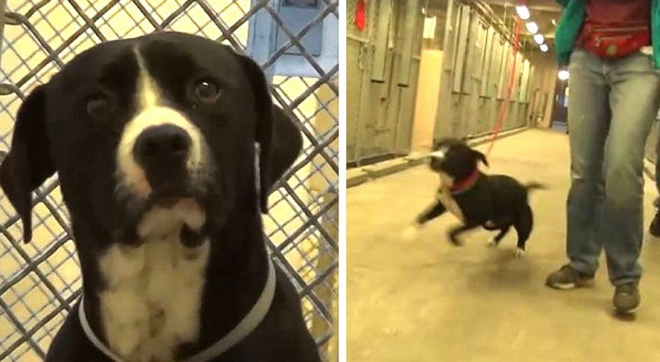 This dog goes crazy with joy when he realizes he has just been adopted