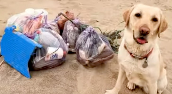 Farah, il Labrador di 4 anni che ripulisce le spiagge della Sardegna dalla plastica