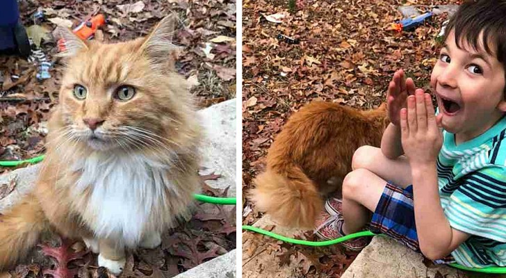 This cat shows up at the home of a little boy whose cat had just died and it is love at first sight