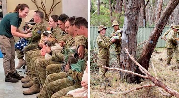 Questi soldati australiani danno da bere ai koala assetati durante la loro pausa di lavoro