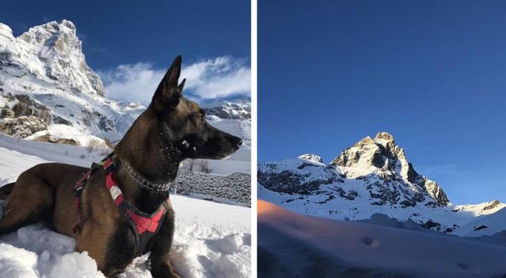 Un cane da soccorso è sopravvissuto per 16 giorni tra i ghiacciai del Cervino ad una temperatura di -25°C